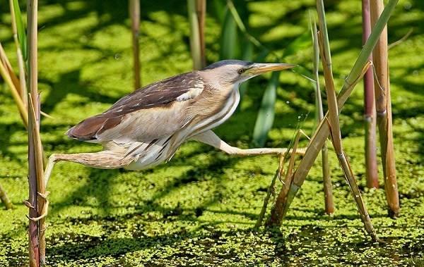 Птицы-Подмосковья-Названия-описания-и-особенности-птиц-Подмосковья-4