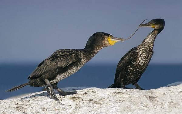 Птицы-Подмосковья-Названия-описания-и-особенности-птиц-Подмосковья-43