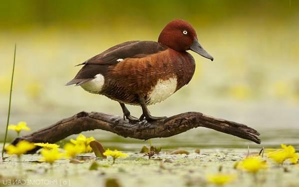 Птицы-Подмосковья-Названия-описания-и-особенности-птиц-Подмосковья-45