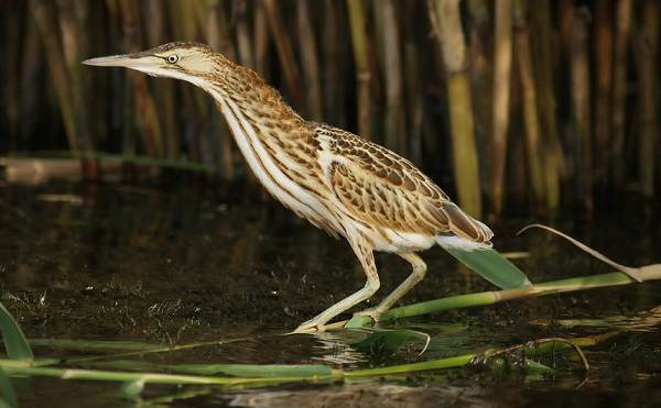 Птицы-Подмосковья-Названия-описания-и-особенности-птиц-Подмосковья-5