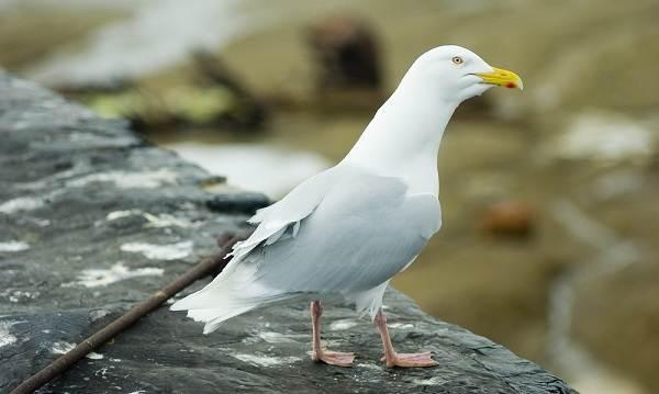 Птицы-Подмосковья-Названия-описания-и-особенности-птиц-Подмосковья-50