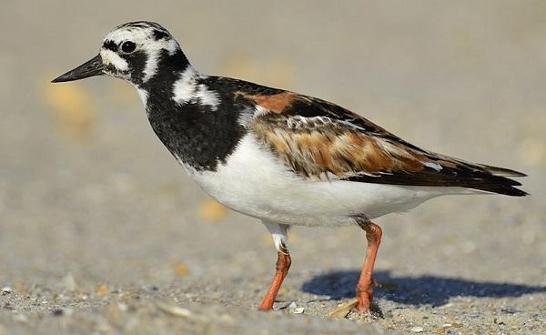 Птицы-Подмосковья-Названия-описания-и-особенности-птиц-Подмосковья-53