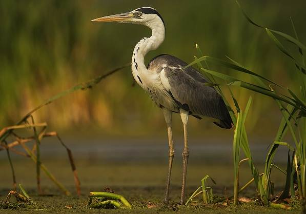 Птицы-Подмосковья-Названия-описания-и-особенности-птиц-Подмосковья-6