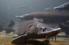 Рыбы без чешуи. Названия описания и виды рыб без чешуи