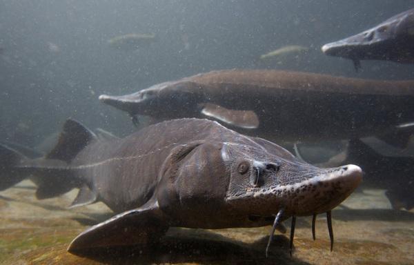 Рыбы-без-чешуи-Названия-описания-и-виды-рыб-без-чешуи-1