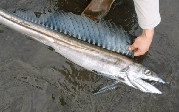 Рыбы-без-чешуи-Названия-описания-и-виды-рыб-без-чешуи-11