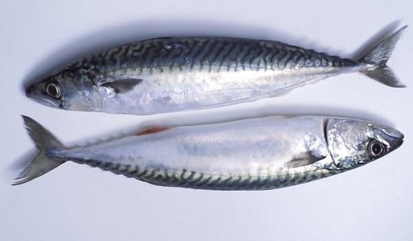 Рыбы-без-чешуи-Названия-описания-и-виды-рыб-без-чешуи-3