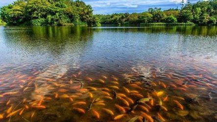 Рыбы озер. Названия, описания и особенности рыб обитающих в озерах