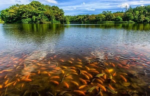 Рыбы-озер-Названия-описания-и-особенности-рыб-обитающих-в-озерах-1
