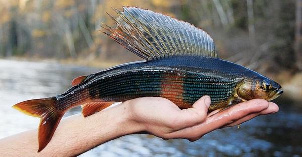 Рыбы-озер-Названия-описания-и-особенности-рыб-обитающих-в-озерах-22