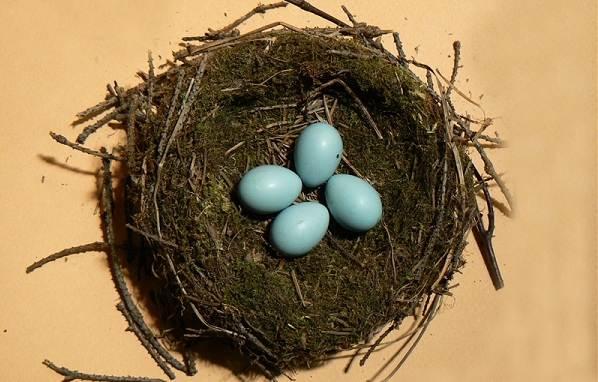 Завирушка-птица-Образ-жизни-и-среда-обитания-завирушки-13