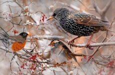 Зимующие птицы. Названия, описания и особенности зимующих птиц