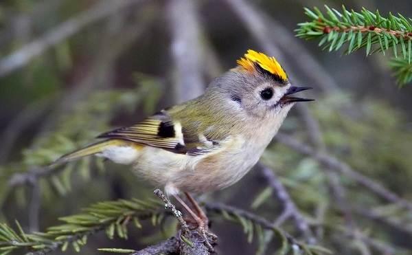Зимующие-птицы-Названия-описания-и-особенности-зимующих-птиц-16