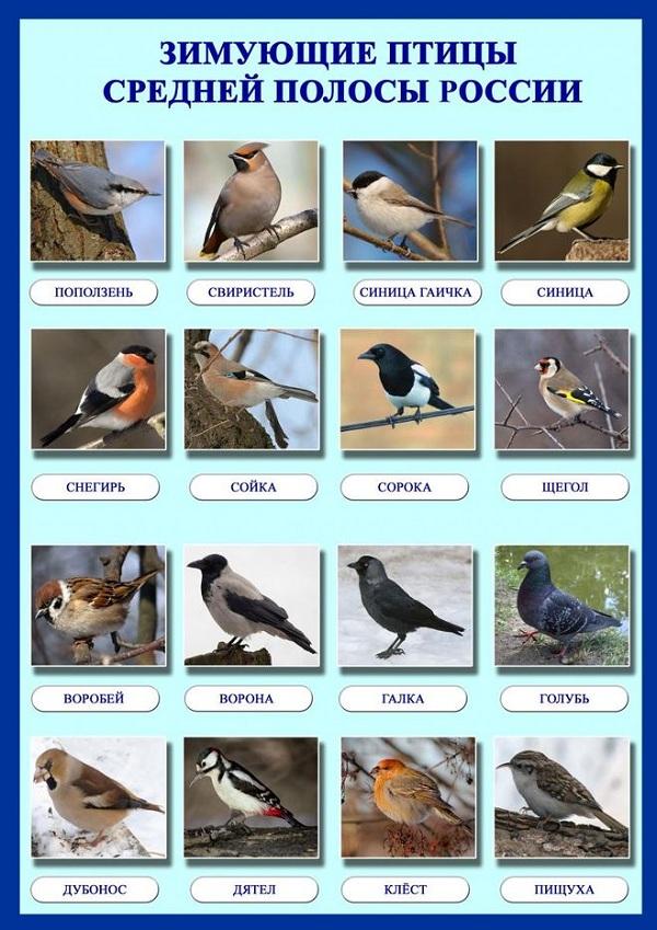 фото и названия птиц россии