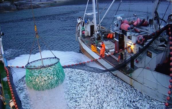 Промысловая-рыба-Названия-описания-и-виды-промысловой-рыбы-1