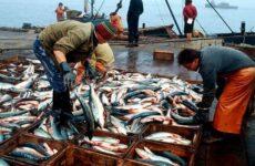 Промысловая рыба. Названия, описания и виды промысловой рыбы