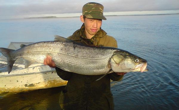 Промысловая-рыба-Названия-описания-и-виды-промысловой-рыбы-23