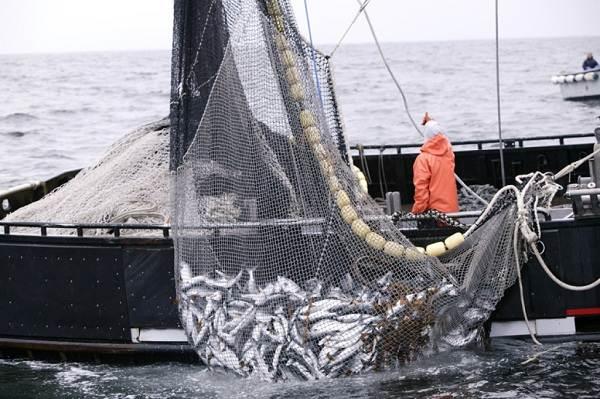 Промысловая-рыба-Названия-описания-и-виды-промысловой-рыбы-5