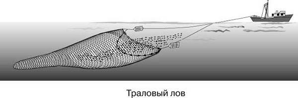 Промысловая-рыба-Названия-описания-и-виды-промысловой-рыбы-7