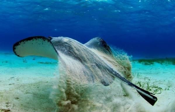 Рыбы-черного-моря-Названия-описания-и-особенности-рыб-черного-моря-10