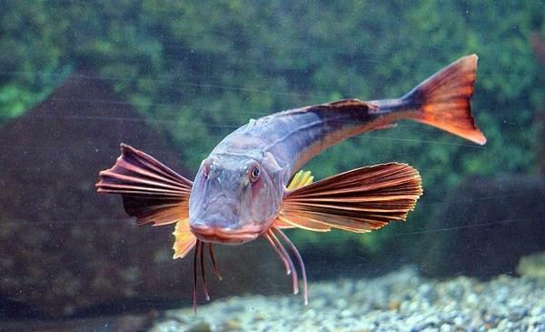 Рыбы-черного-моря-Названия-описания-и-особенности-рыб-черного-моря-14