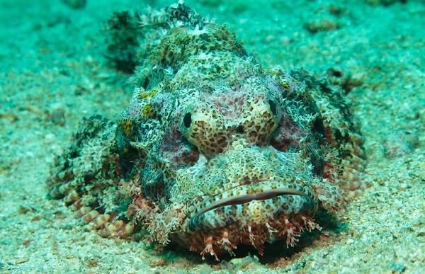 Рыбы-черного-моря-Названия-описания-и-особенности-рыб-черного-моря-27