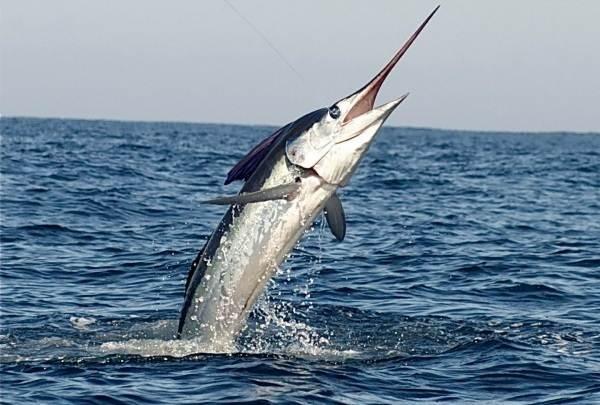 Рыбы-черного-моря-Названия-описания-и-особенности-рыб-черного-моря-34