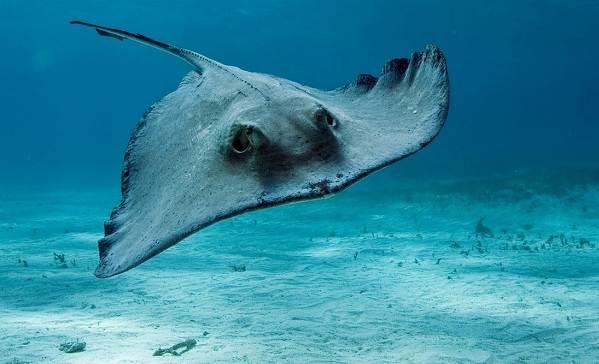 Рыбы-черного-моря-Названия-описания-и-особенности-рыб-черного-моря-9