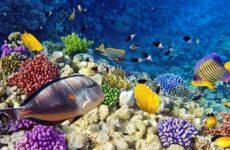 Рыбы Красного моря. Названия, описания и особенности рыб Красного моря