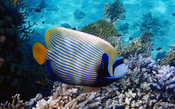 Рыбы-Красного-моря-Названия-описания-и-особенности-рыб-Красного-моря-14