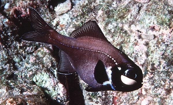 Рыбы-Красного-моря-Названия-описания-и-особенности-рыб-Красного-моря-16