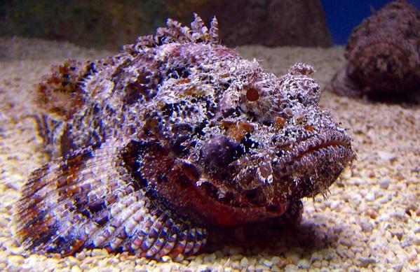 Рыбы-Красного-моря-Названия-описания-и-особенности-рыб-Красного-моря-18
