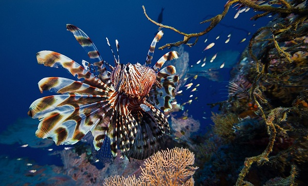 Рыбы-Красного-моря-Названия-описания-и-особенности-рыб-Красного-моря-19