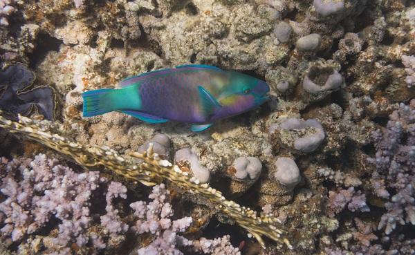 Рыбы-Красного-моря-Названия-описания-и-особенности-рыб-Красного-моря-2