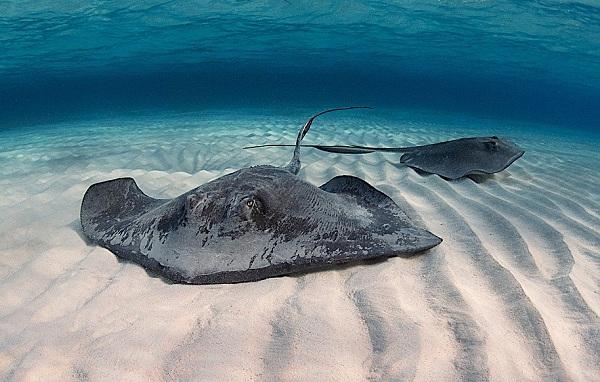 Рыбы-Красного-моря-Названия-описания-и-особенности-рыб-Красного-моря-21