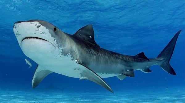 Рыбы-Красного-моря-Названия-описания-и-особенности-рыб-Красного-моря-28
