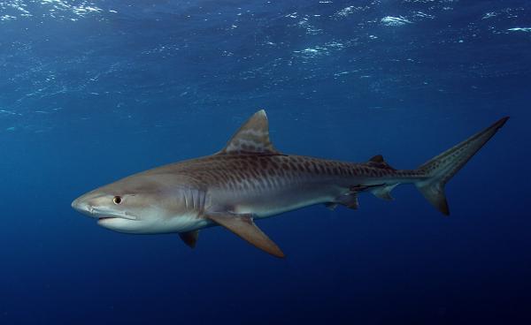 Рыбы-Красного-моря-Названия-описания-и-особенности-рыб-Красного-моря-30