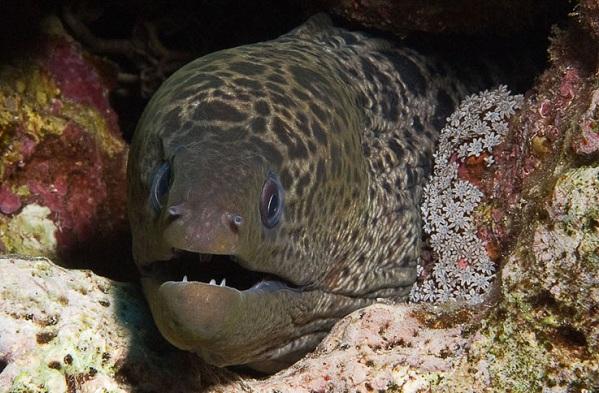Рыбы-Красного-моря-Названия-описания-и-особенности-рыб-Красного-моря-33