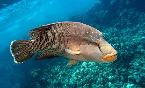 Рыбы-Красного-моря-Названия-описания-и-особенности-рыб-Красного-моря-4