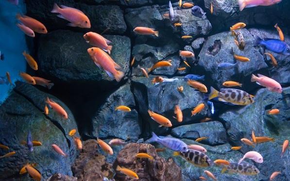 Рыбы-Красного-моря-Названия-описания-и-особенности-рыб-Красного-моря-6