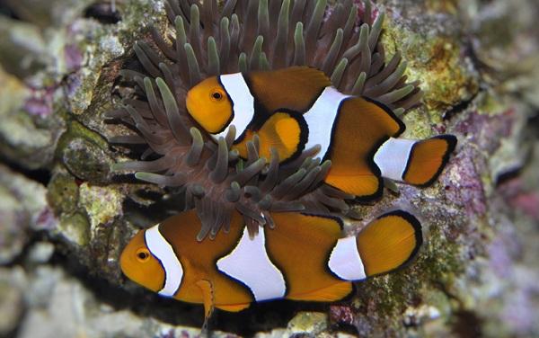 Рыбы-Красного-моря-Названия-описания-и-особенности-рыб-Красного-моря-7