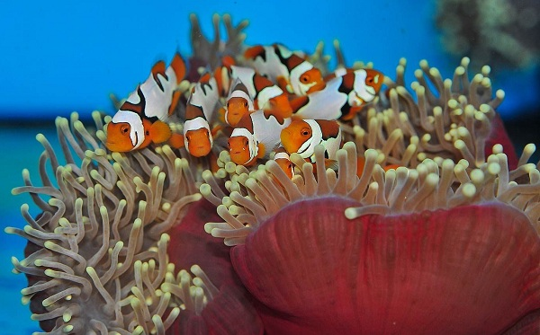 Рыбы-Красного-моря-Названия-описания-и-особенности-рыб-Красного-моря-8