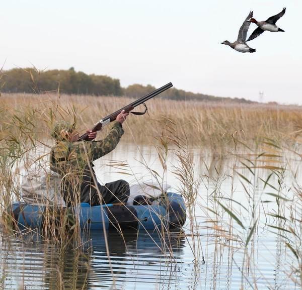 Свиязь-утка-птица-Образ-жизни-и-среда-обитания-свиязи-7