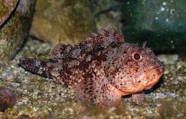 Хищные-рыбы-Названия-описания-и-особенности-хищных-рыб-17