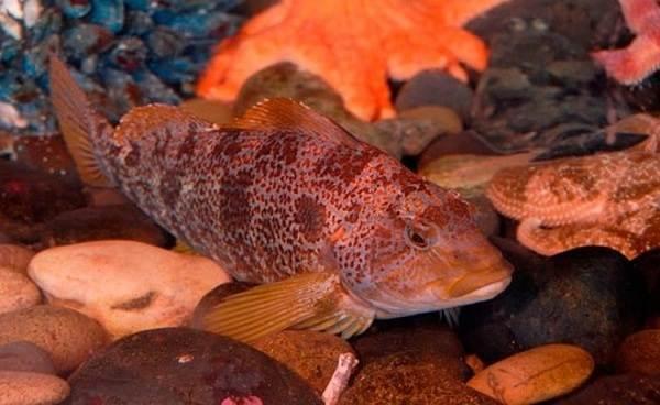 Хищные-рыбы-Названия-описания-и-особенности-хищных-рыб-24