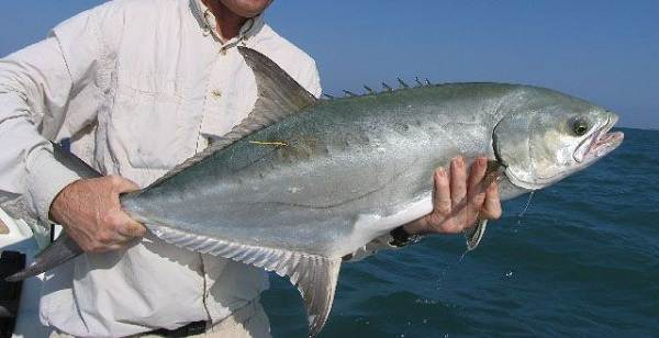 Хищные-рыбы-Названия-описания-и-особенности-хищных-рыб-30