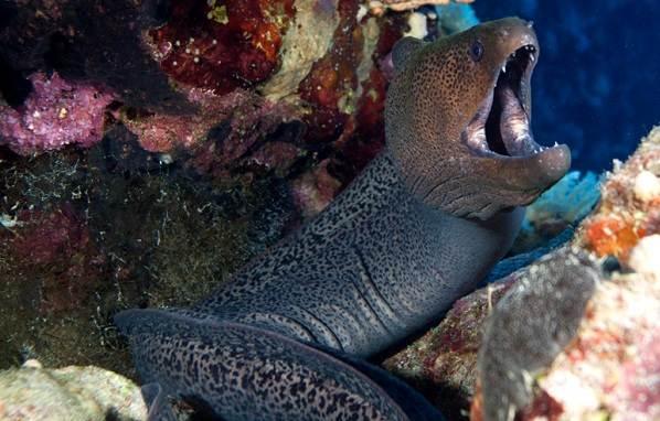 Хищные-рыбы-Названия-описания-и-особенности-хищных-рыб-4
