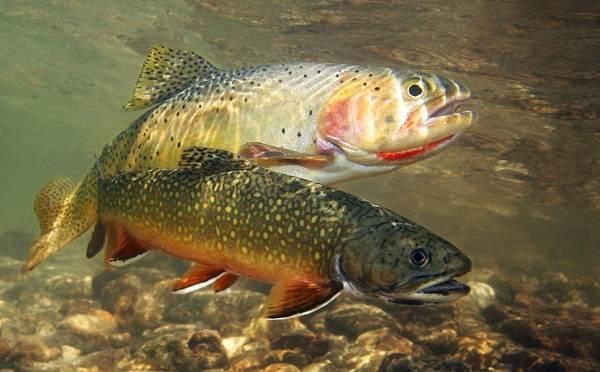 Хищные-рыбы-Названия-описания-и-особенности-хищных-рыб-45