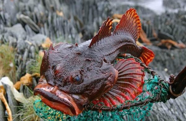 Хищные-рыбы-Названия-описания-и-особенности-хищных-рыб-49
