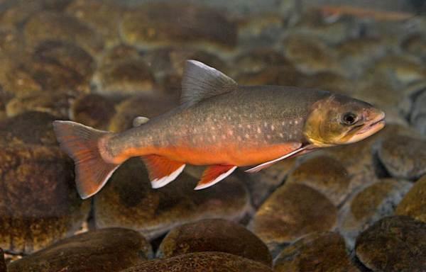 Хищные-рыбы-Названия-описания-и-особенности-хищных-рыб-50